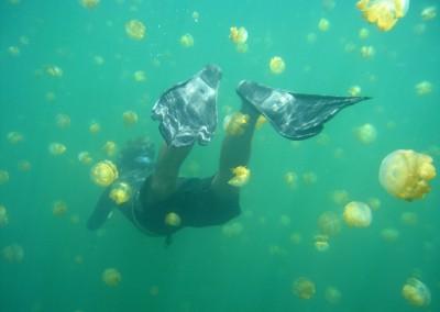 2008 freediving in jellyfish lake
